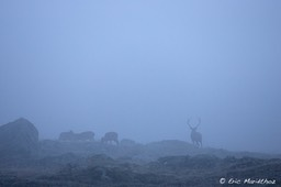 cerf_ambiance-2